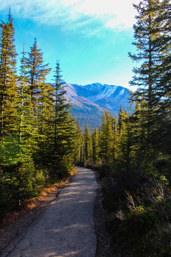 Bow Summit Trail - Peyto Lake